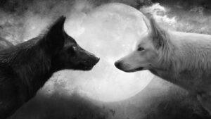 black wolf white wolf moon