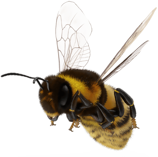 Bee-Personal-Mythology 3
