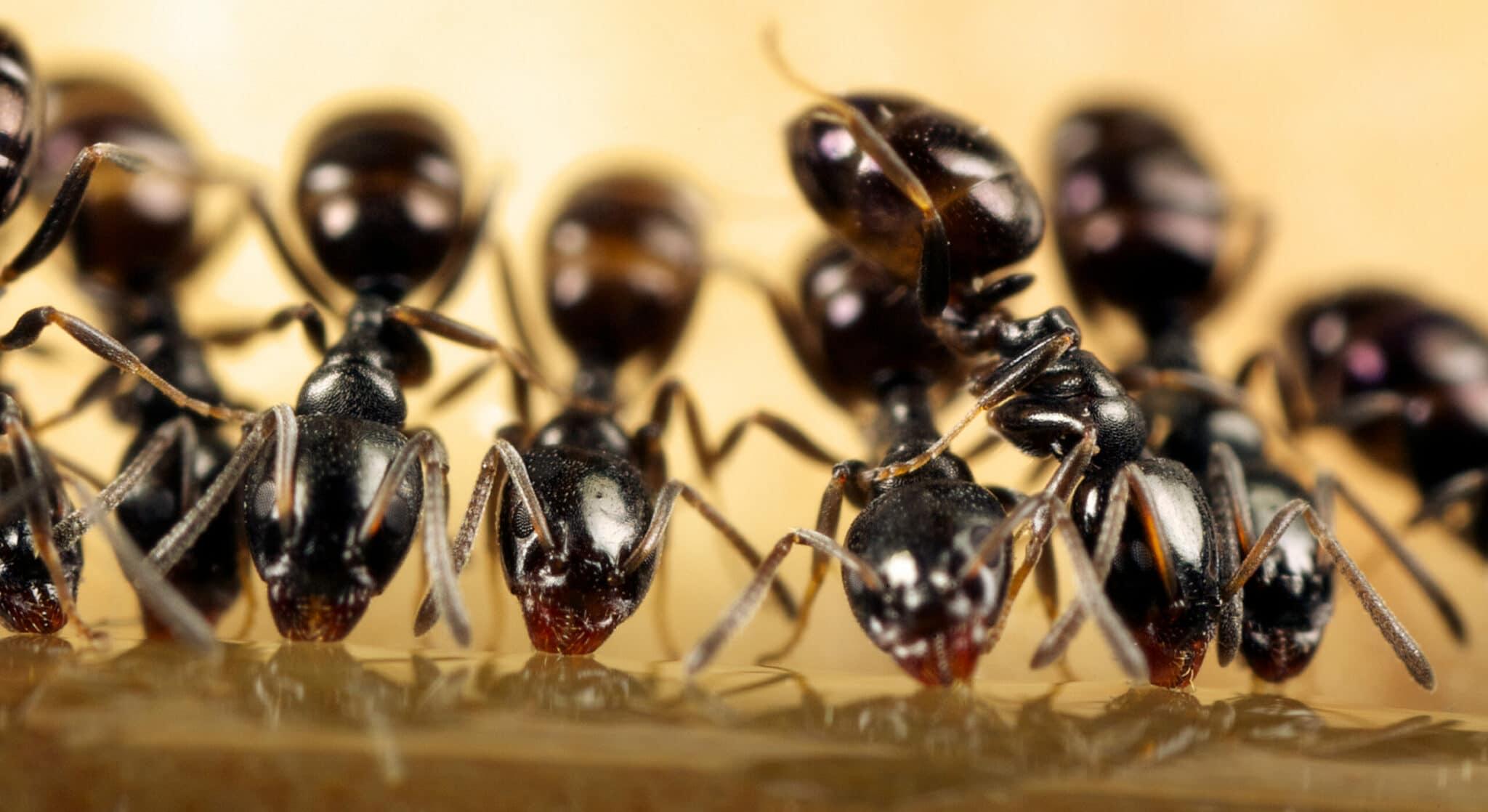 Ant Symbolism, Meaning, & Dream Interpretation