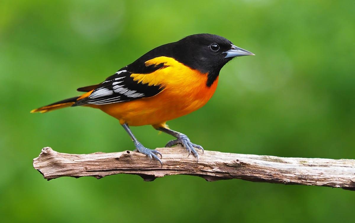 bird symbolism meaning
