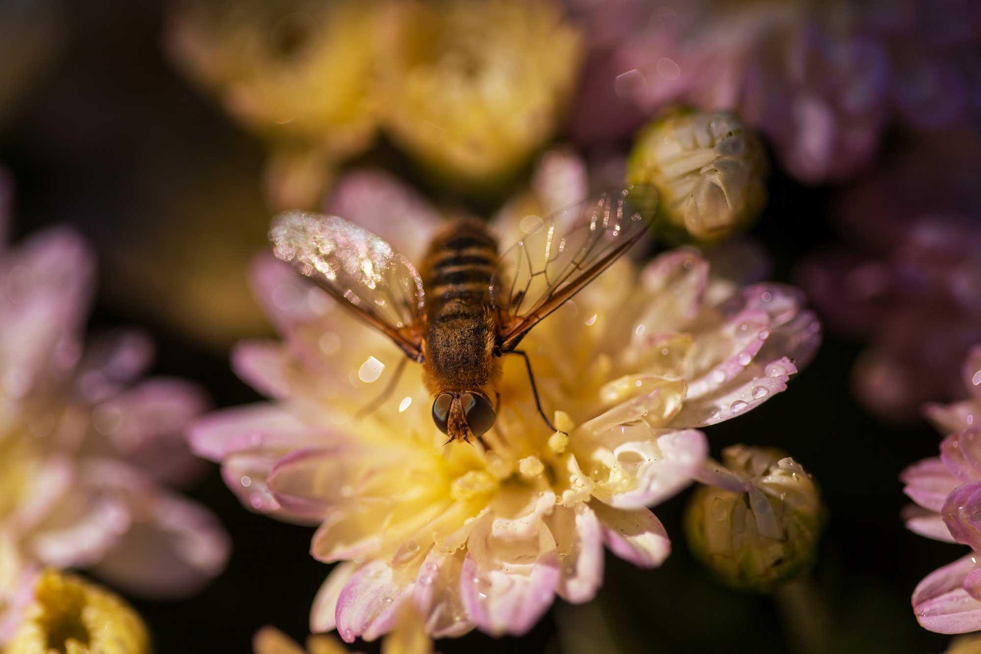 Bee Symbolism, Meaning, & Dream Interpretation