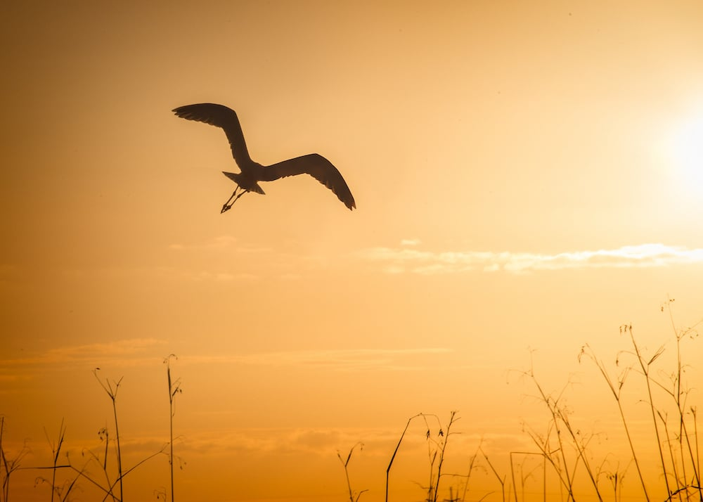 flying meaning bird in silhouette
