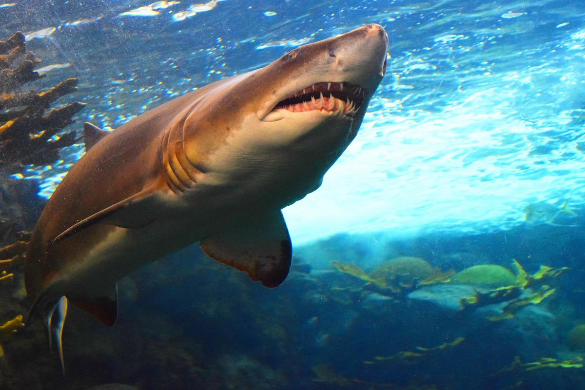 shark meaning symbolism mythology