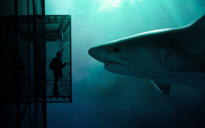 After Years of Chronic Nightmares, a Personal Mythology about Sharks 🦈 Gave This Woman Back Her Power