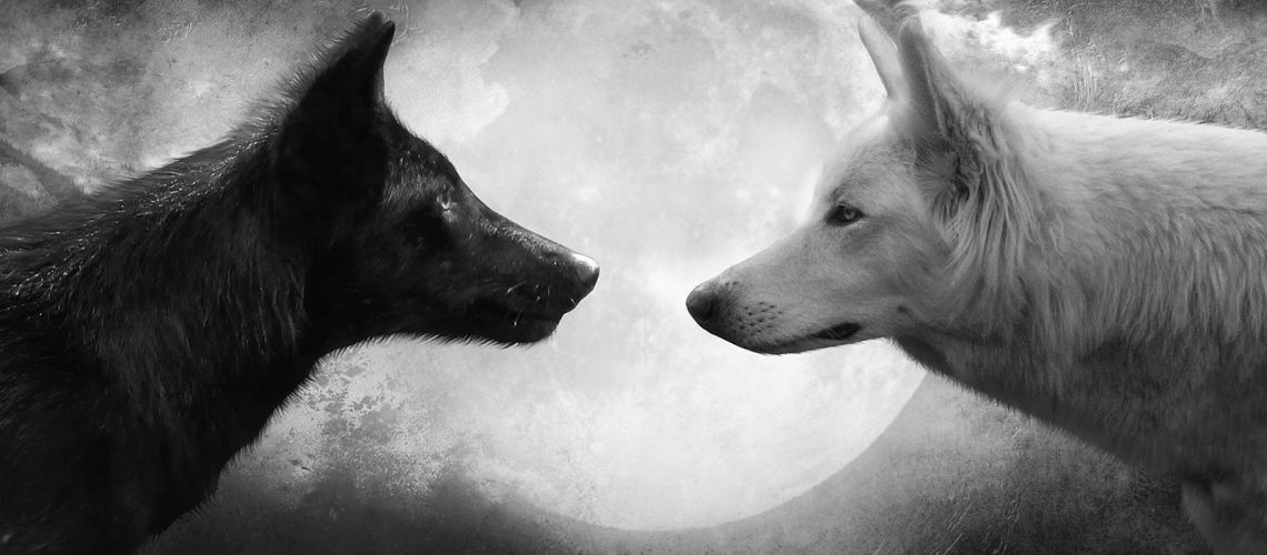 black wolf white wolf moon